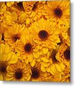 Cluster Of Yellow Blooms Metal Print