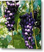 Clusters Of Red Wine Grapes Hanging On The Vine Metal Print