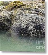 Coast Ecosystems Metal Print