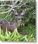 Coastal Deer Metal Print