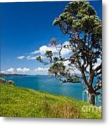 Coastal Farmland Landscape With Pohutukawa Tree Metal Print