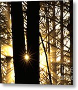 Coastal Forest Metal Print by Art Wolfe