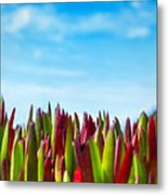 Coastal Ice Plant Metal Print