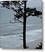 Coastal Tree Metal Print