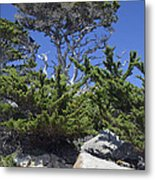 Coastal Trees In California's Point Lobos State Natural Reserve Metal Print by Bruce Gourley