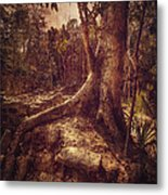 Coba Tree Metal Print by Stuart Deacon