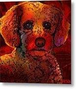Cockapoo Dog Metal Print