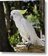 Cockatoo White Parrot Metal Print