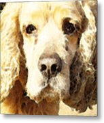 Cocker Spaniel Art - Mellow Yellow Metal Print