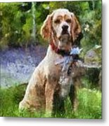 Cocker Spaniel Outside 04 Metal Print