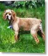 Cocker Spaniel Outside 07 Metal Print