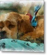 Cocker Spaniel Photo Art 06 Metal Print