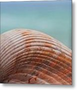 Cockle Shell Metal Print