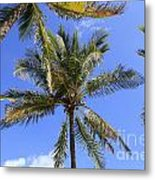 Cocoanut Palm Trees Sky Background Metal Print