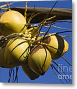 Coconut 1 Metal Print