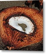 Coconut Metal Print by Gregory Young
