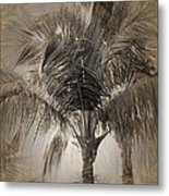 Coconut Palm Tree Metal Print