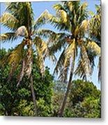 Coconut Palm Trees In Key West Metal Print