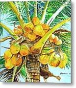 Coconut Series II Metal Print