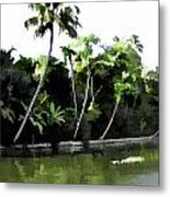 Coconut Trees And Others Plants In A Creek Metal Print