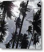 Coconut Trees In Barbados Metal Print