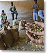 Coffee Beans Santo Domingo Metal Print