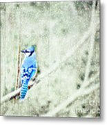 Cold Day For A Blue Jay Metal Print