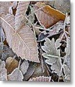 Cold Leaves Metal Print