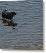 Cold Water Fetch Metal Print