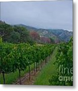 Colibri Vineyards Metal Print