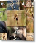 Collage Marsh Life Metal Print