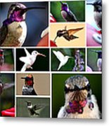 Collage Of Hummers 2 Metal Print