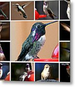 Collage Of Hummers Metal Print