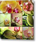 Collage Orchids 01yellow Green - Elena Yakubovich Metal Print