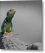 Collard Lizard Metal Print