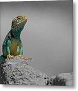 Collard Lizard Metal Print by Old Pueblo Photography