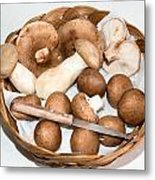 Collected Mushrooms Metal Print
