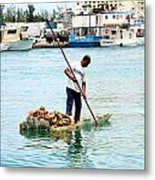 Collecting Conch Metal Print