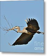 Collecting Nest Materials Metal Print