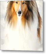 Collie  Metal Print by Diana Angstadt