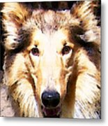 Collie Dog Art - Sunshine Metal Print by Sharon Cummings
