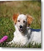 Collie Puppy Metal Print