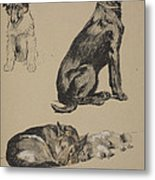 Collie, Retriever, Alstian And Keeshund Metal Print