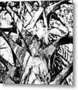 Collier-seminole Sp 17 Metal Print
