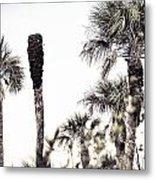 Collier-seminole Sp 24 Metal Print