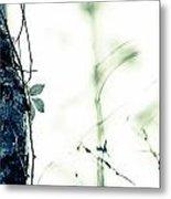 Collier-seminole Sp 3 Metal Print