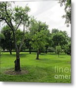 Colonial Apple Orchard Metal Print