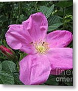 Colonial Rose - Floral Metal Print