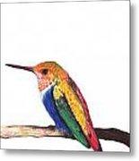 Color Birds Study  4 Metal Print