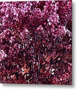 Color In The Tree 01 Metal Print